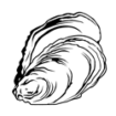 Huîtres creuses n°2 - Arcachon / Cap Ferret