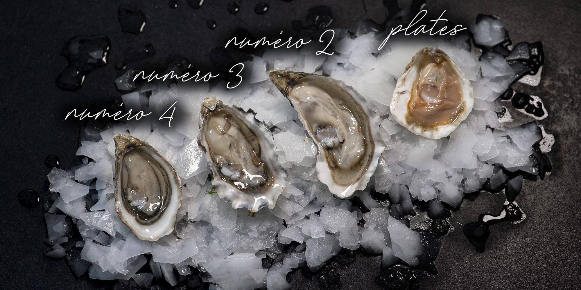 En savoir plus sur la taille / calibre des huîtres. Possibilité de commander des huîtres du Bassin d'Arcachon - parc à huîtres : banc d'arguin, île aux oiseaux, grand banc - La cabane de l'Aiguillon - Arcachon